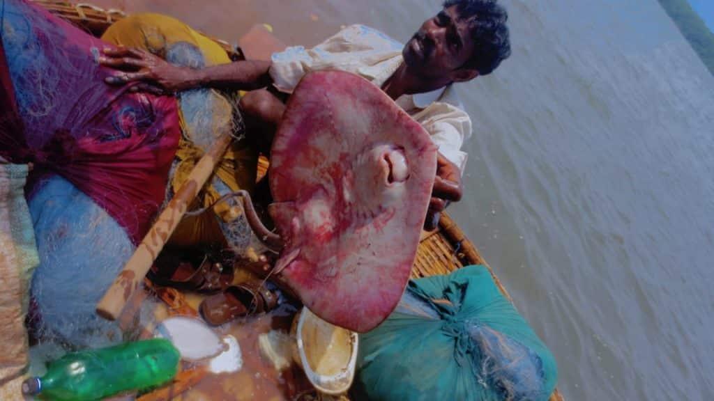 Goa-Stingray-Fish-Delicious-Dinner