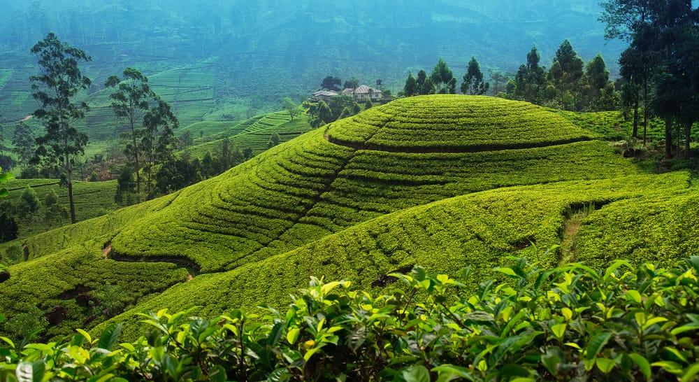 Nuwara Eliya-Places to Visit in Sri Lanka: Tourism