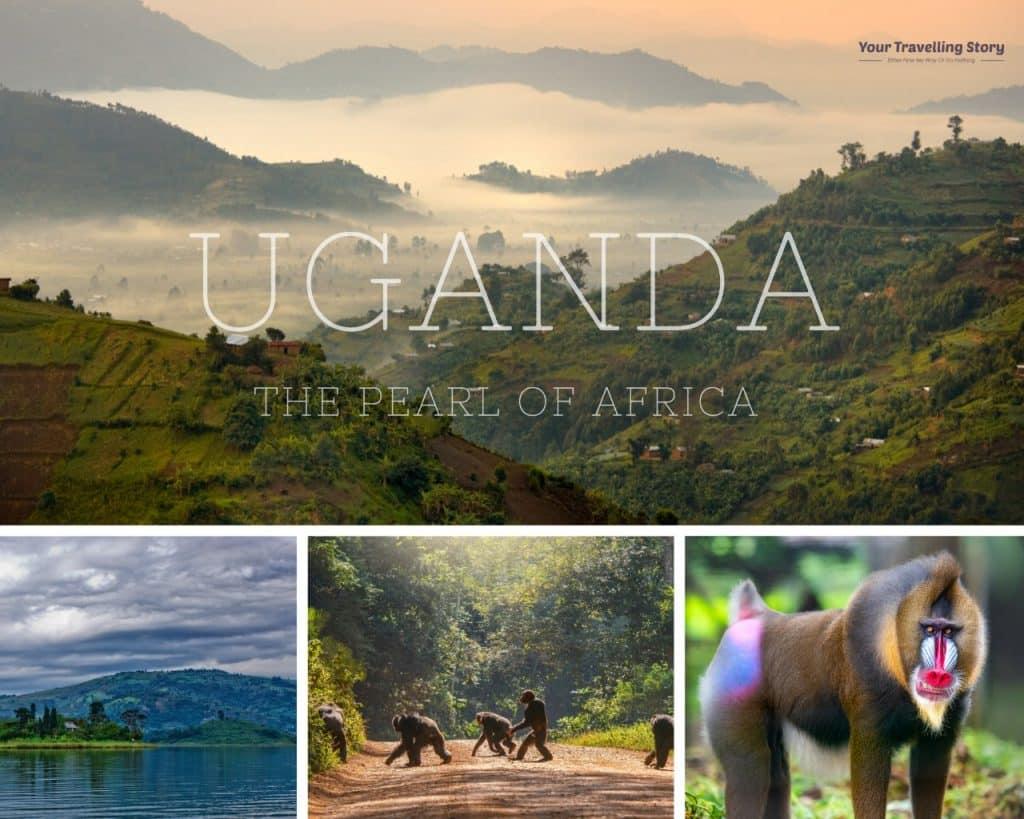 Uganda: wild life, safari and nature