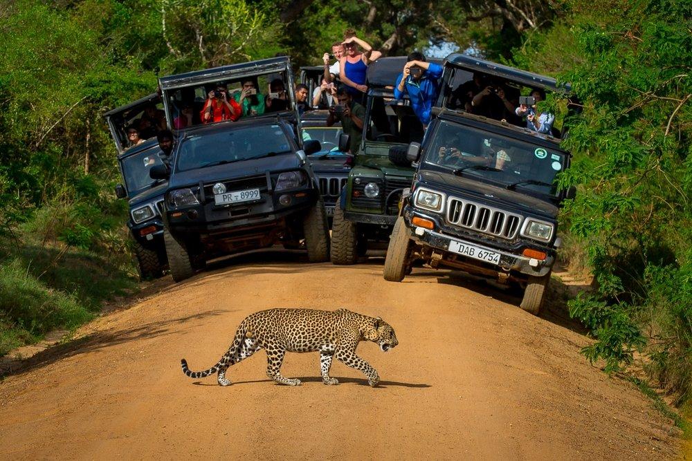 Yala-Yala-National-Park-Places-to-Visit-in-Sri-Lanka