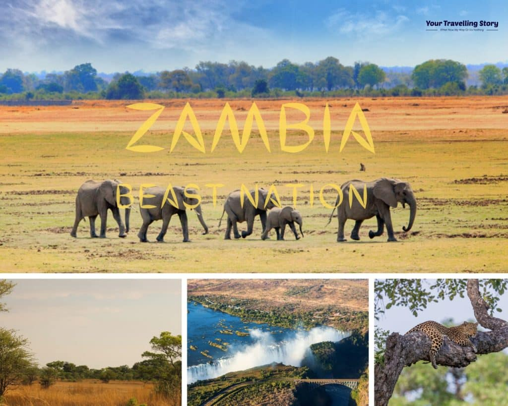 Zambia: most adventure place and worth for safari and wild life