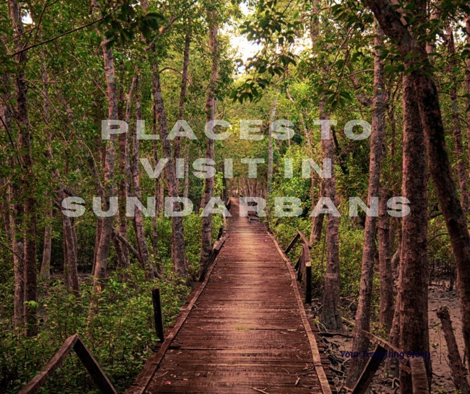Sundarbans National Park: Mangrove Forest, Animals & Tourists