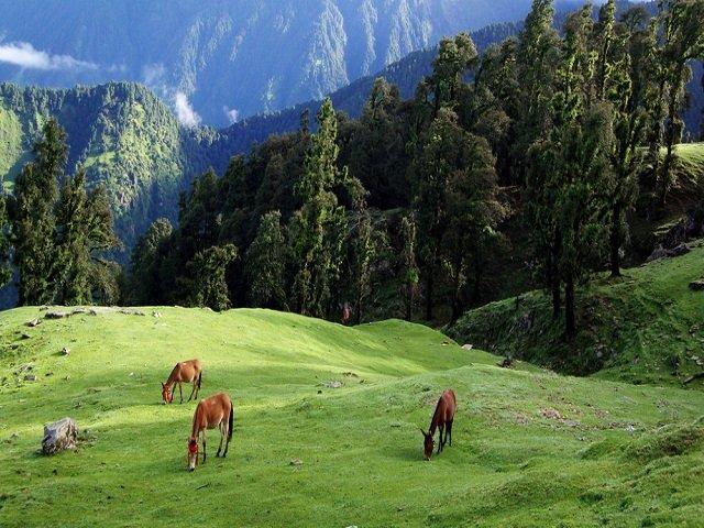 Chopta- Uttarakhand Solo Trip to Uttarakhand via Road
