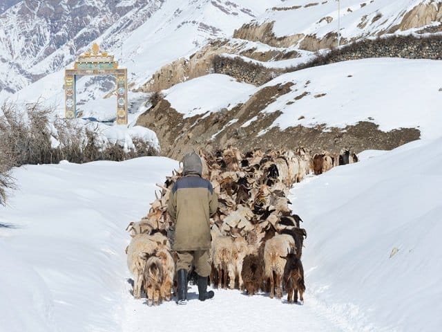 Spiti People's Life, Culture and their love towards nature